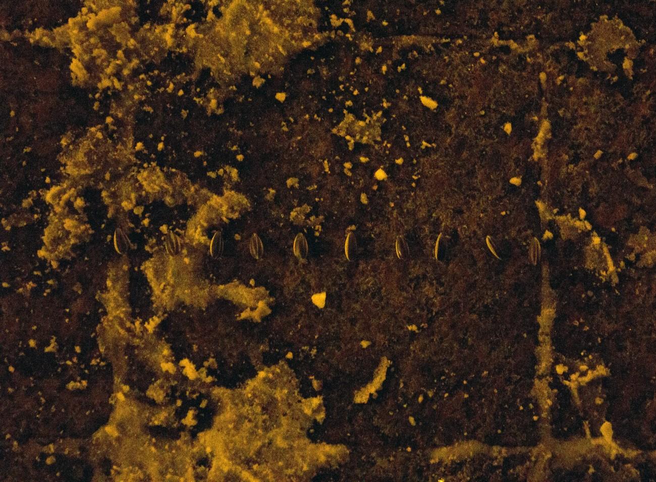 Steve Giasson. Performance invisible n° 74 (Détruire une œuvre d'art (ou Abuser discrètement d'un pouvoir)). Ai Weiwei. Sunflower Seeds. 2010. D'après Ai Weiwei. Dropping a Han Dynasty Urn. 1995. Performeur : Steve Giasson. Crédit photographique : Martin Vinette. Place de Paris, Québec. 4 janvier 2016.